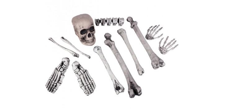 Cráneo y 11 huesos.